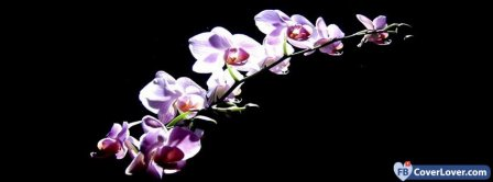 Purple Orchids Facebook Covers
