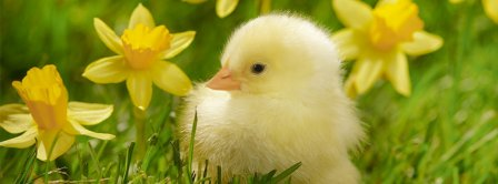 Spring Chick Facebook Covers