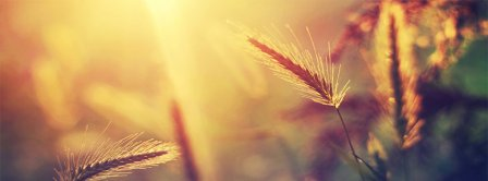Summer Wheat Facebook Covers